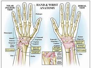 Wrist Pain In Crossfit  U2014 Arrow Physical Therapy