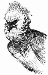 Eagle Pages Coloring Harpy Realistic Perched Branch sketch template