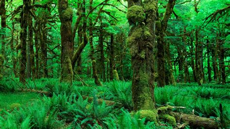 Jungle Forest Moss Green Trees Hd Wallpaper  Nature And