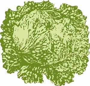 Lettuce 2 Clip Art at Clker.com - vector clip art online ...