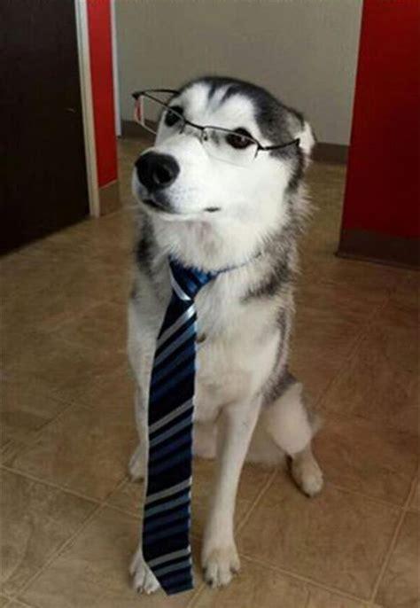 pups ready    dog  work day