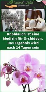 Dünger Für Orchideen : knoblauch ist eine medizin f r orchideen das ergebnis ~ A.2002-acura-tl-radio.info Haus und Dekorationen