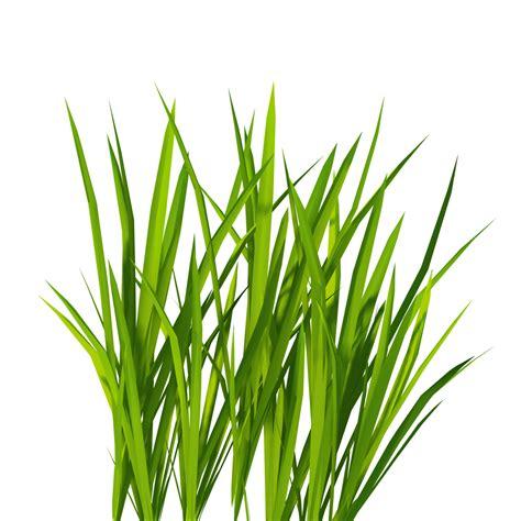grass clipart free new textures billboard grass reiner s tilesets