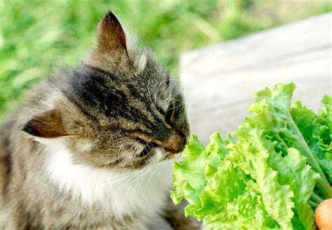 cat is an omnivore give reasons