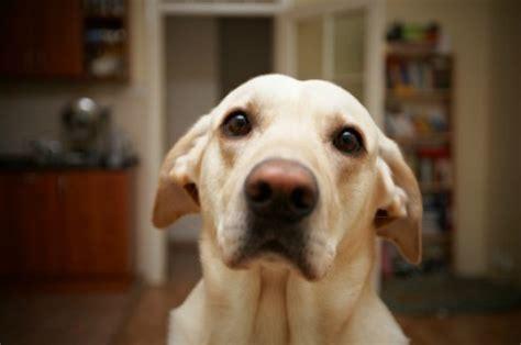feeding  dog  food allergies thriftyfun