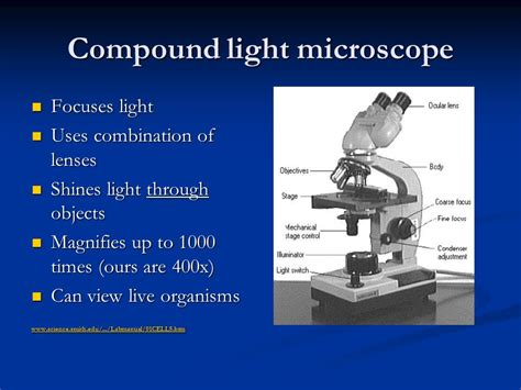 light microscopes can magnify objects up to microscopes ppt video online download
