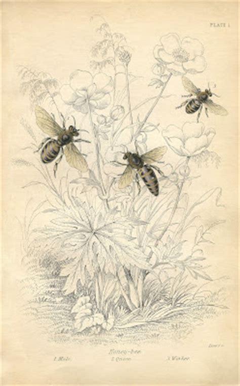 vintage printable honey bees instant art