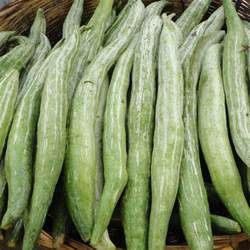 Varieties Of Pumpkins For Cooking by Snake Gourd F1 Seeds Trichosanthes Cucumerina Var Anguina