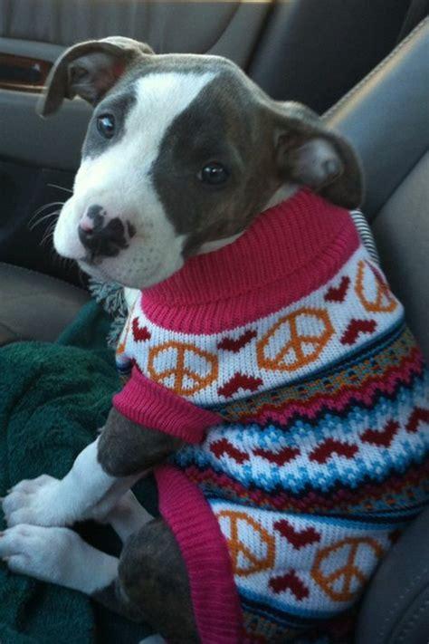 pitbull sweaters knit sweater crafts