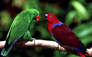 Parrot Birds Wallpapers - Entertainment Only