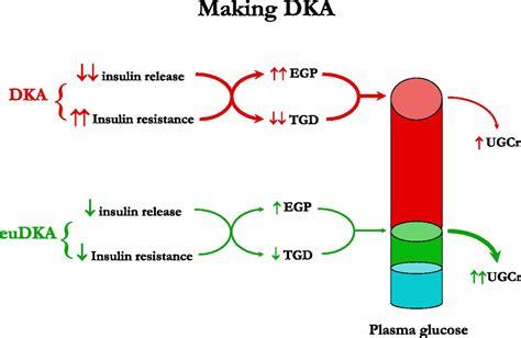 euglycemic diabetic ketoacidosis  predictable