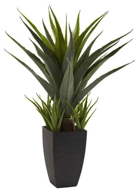 nearly agave with black planter decorative plant contemporary indoor pots and