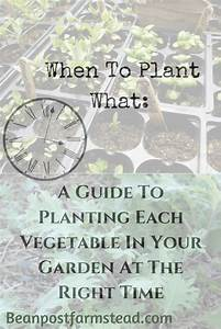 When To Plant What  A Guide To Planting Each Vegetable In