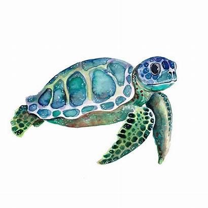 Turtle Sea Turtles Colorful Painting Watercolor Seaturtle