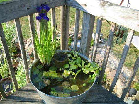 wildlife pond ideas  beautiful examples moral