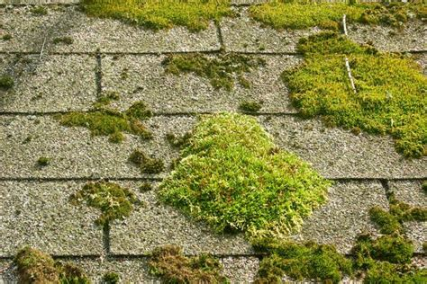 Moss Removal And Treatment