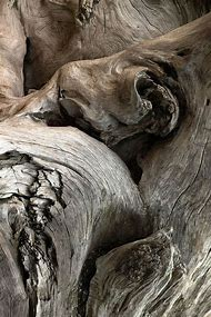 Gnarled Wood Texture