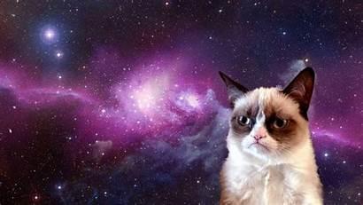 Meme Funny Cat Grumpy Humor Quote Backgrounds