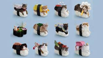 sushi cats nekozushi an absurd combination of cats and sushi