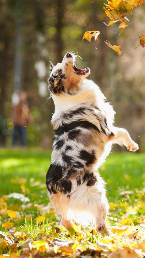 wallpaper dog puppy jumping leaves autumn pet green