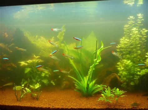 eau d aquarium trouble pourquoi mon eau est trouble