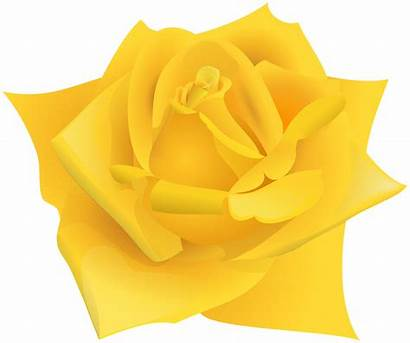 Yellow Rose Clipart Flower Roses Transparent Yopriceville