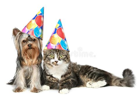 Dog with Party Hat and a White Background