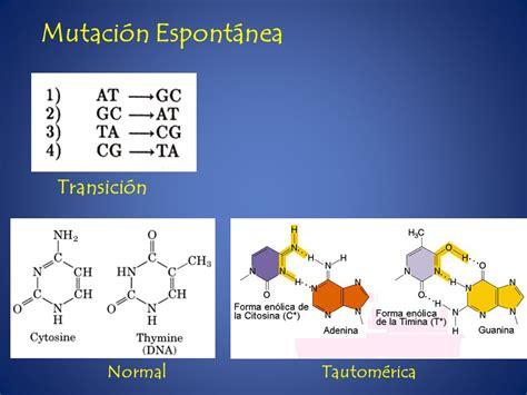metabolismo del adn replicacion  video  descargar