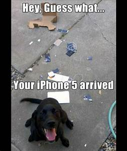 Dog ipod | Animals using Apple products | Pictures | Pics ...