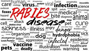 The canine rabies vaccine