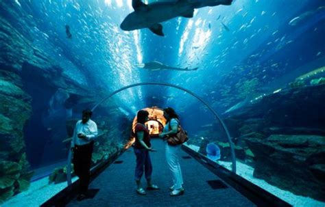 dubai le plus grand aquarium du monde a des fuites