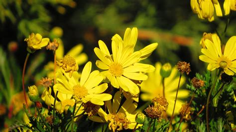 flowers, Yellow Flowers, Bees, Nature Wallpapers HD ...