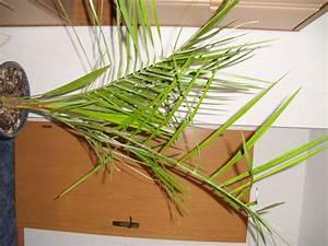 Wo Bekommt Man Mutterboden : re wo bekommt man jubaea chilensis 2 ~ Lizthompson.info Haus und Dekorationen