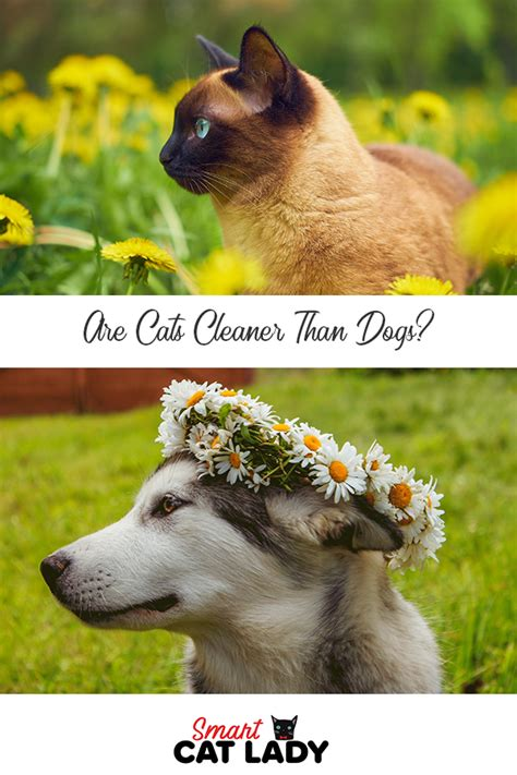 cats dogs cleaner than cat cleaning dog themselves kingdom lady tips