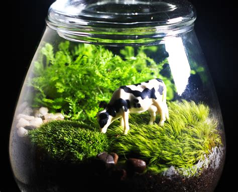 designer terrarium how to make your own terrarium cow terrarium inhabitat green design innovation