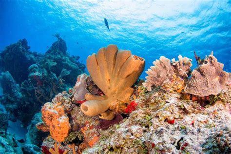 Dive Destinations - dive destinations scuba diving website for