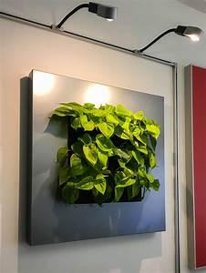Pflanzen An Der Wand : bl tterwerk statt picasso lebende pflanzenbilder ~ Articles-book.com Haus und Dekorationen