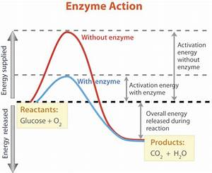 Enzymes And Biochemical Reactions