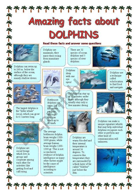 english worksheets amazing facts  dolphins