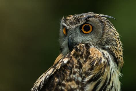 Background Owl Wallpapers by Owl Hd Wallpaper Background Image 1920x1280 Id