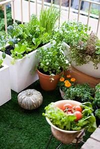 Gurken Im Kübel : geeignete gem sesorten salad tomaten gurken balkon garten living pinterest garten ~ Frokenaadalensverden.com Haus und Dekorationen