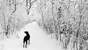 Black and White Snow Wallpaper