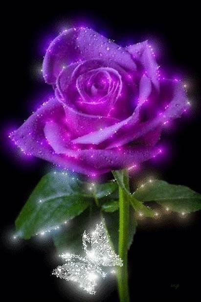 Flowers Roses Purple Rose Pretty Glitter Sending