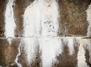 Was Kann Man Gegen Silberfische Im Schlafzimmer Tun : mauerwerk entsalzen wie und warum wird das gemacht ~ Lizthompson.info Haus und Dekorationen