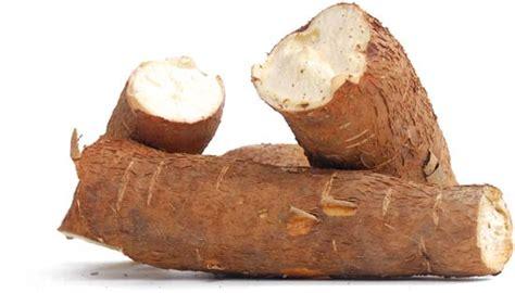 Cassava | plant | Britannica.com