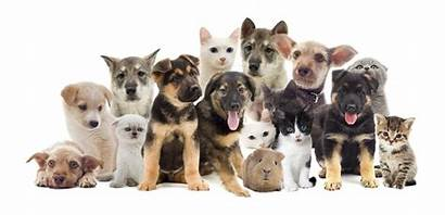 Pet Pets Aid Background Cat Dog Traveling