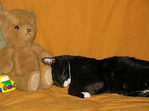 7 Cats Snuggling with Teddy Bears — Aww! - Catster