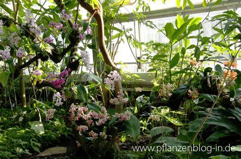 Botanischer Garten Berlin Orchideenschau by Orchideenschau Botanischer Garten Leipzig 2014 187 Majas