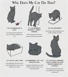 cat behavior cat behaviours explained page 2 of 2 all about cats