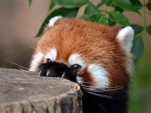 Die 73+ Besten Süße Tierbabys Hintergrundbilder